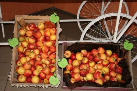 Gr. 1 - 4 Jabłko smak jesieni.