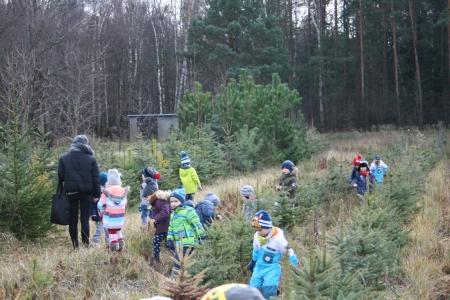 Gr. 2 i Gr. 3 - Zima w lesie - wyprawa po świąteczne drzewko.