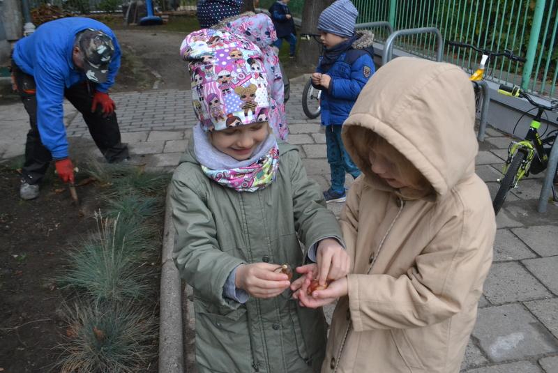 Mali ogrodnicy sadzą kwiaty w przedszkolu - Gr. 1-Motylki i Gr. 3-Ważki
