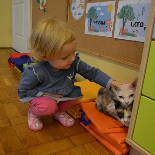 Kocie odwiedziny - Gr. 1 i Gr. 4